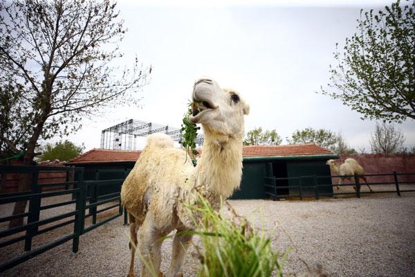 Hayvanat bahçesinin bakıcıları koronavirüse rağmen işlerinin başında